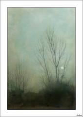 ¿Sol o luna? (V- strom) Tags: paisajes landscape sol luna sun moon texturas textures árbol tree concepto concept nikon nikon2470 nikond700 vstrom cielo sky hierba grass nubes clouds niebla fog forest verde green