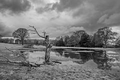 Shugborough Estate (Rocacidi) Tags: monochrome landscape water reflections reflection shugborough nationaltrust staffordshire blackandwhite