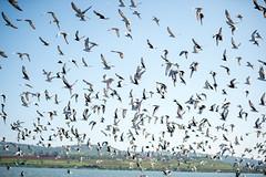 Jinja-H18_6324 (Carl LaCasse) Tags: uganda jinga lakevictoria nile river source people smile birds fishishing sunset beauty