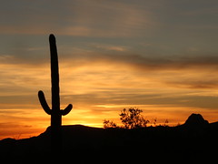 Saguaro Sunset (lars hammar) Tags: sunset tucson arizona saguaro cactus saguarocactus
