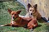 Chiquita y Tota. (jagar41_ Juan Antonio) Tags: animales animal perros perro mascotas mascota