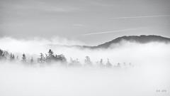 Morning Fog... (New Views II) (Ody on the mount) Tags: bäume em5ii landschaft mzuiko75300 nebel omd olympus pflanzen schwäbischealb wald bw fog landscape monochrome sw trees