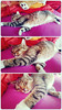 Wish I could be this lazy (Bloopoop) Tags: cat animal lazy sleepy cute fluffy soft photo amateur collage