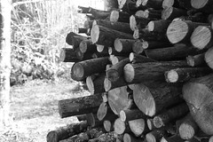 Empilement de bûches (domiguichard) Tags: pile tas wood bois logs bûches