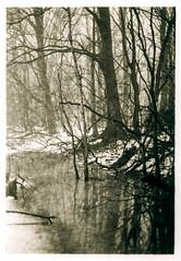 Foerst winter scene in fog (K.Pihl) Tags: pellicolaanalogica canon50mmf18 darkroom rodinal1100 selenium film standdevelopment blackwhite schwarzweiss bw agfaapx100 analog canoneos50eelaniie
