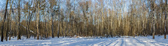 2018-03-19-08-19-42-7D2_3947-Pano (tsup_tuck) Tags: 2018 march moscow pano spring woods