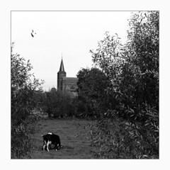 In the country with the old school Nikon F3 (Fr@nk ) Tags: minoltascandualiii scan film kodak tmax400 tmax developper fix fixing analog analoque 35mm kleinbeeld negative monochrome blackandwhite europe neer limburg holland netherlands church catholic sint martinus kerk nikonf3 nikkor35mm lens scanner filmscanning optical resolution 2820dpi road sky building tree tower square cow grass meadow field shrubs cover album art topf25 topf50 world100f krumpaaf mrtungsten62 interesting interestingness frnk