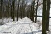 Der Weg / The way (photomotivjäger) Tags: weg germany winter trees bäume