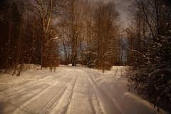 Spring Road (Sergei P. Zubkov) Tags: 1111v11f march road snow