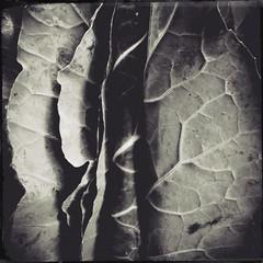 Produc(ed)-12473 (Poetic Medium) Tags: square stilllife produce blackandwhite kitcamghostbird snapseed ipod food