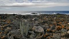 auf steinigem Weg (marionkaminski) Tags: teneriffa spanien spain espana espagne meer ocean atlantik küste coast costa côte lavagestein loscristianos seascape panasonic lumixfz1000 wolken clouds nuages nubes
