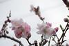 (takafumionodera) Tags: flower fujisawa japan pentax q7 花 藤沢