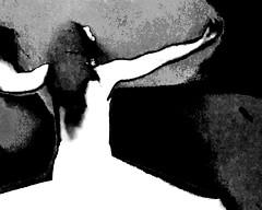 Dancer ¬ 0563 (Lieven SOETE) Tags: 2018 young junge joven jeune jóvenes jovem feminine 女士 weiblich féminine femminile mulheres lady woman female vrouw frau femme mujer mulher donna жена γυναίκα девушка девушки женщина краснодар krasnodar body corpo cuerpo corps körper tänzer dancer danseuse tänzerin balerina ballerina bailarina ballerine danzatrice dançarina sensual sensuality sensuel sensuale sensualidade temptation sensualita seductive seduction
