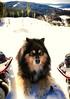 Snowshoes worked nicely today. (evakongshavn) Tags: myview dog dogsonadventures landscape landschaft paysage winter winterwonderland winterwald winterlandscape snow hivernal hiver neige view snowshoe snowshoeing