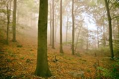 DSC_0071 - Kopie (Jens Scheider) Tags: buchenwald grumsin brandenburg uckermark