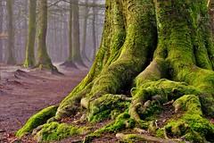 At the foot of the tree (peeteninge) Tags: green tree forest nature moss groen boom bos mos natuur fujifilmxt2 fujifilm