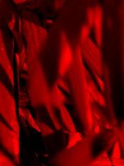 Schatten 4 (schubertj73) Tags: schatten shadow blätter leaves x10 fujifilm gimp fotografie foto fotos fotograf focus out sharp scharf unscharf photo photography photos photographer photoart makro macro makrofotografie macrophotography abstrakt abstract abstractart abstrait abstractphotography schubertj73 jörg schubert iserlohn naturfotografie natur nature naturephoto naturephotography