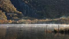 Dawn Patrol (Lindi m) Tags: swans llynnpadarn wales autumn mist reflections fence dawn sunrise llanberis quarry