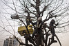 Travailleur de jour (epelletier2024) Tags: spring cleaning working cutting wood tree tokyo akihabara chainsaw