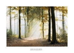 heaven on earth (Zino2009 (bob van den berg)) Tags: light bright sunlight rays sunrays beam forest wald nebel pines leaves leaving autumn holland dutch path heaven heavently area trees silhouettes walk morning sunrise enchanted noone anybody hello quiet silence peaceful zino2009