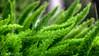 Green flame (kud4ipad) Tags: 2017 miami triisland vivitar9025 plant green