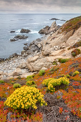 Goldenbush in Spring (Kirk Lougheed) Tags: bigsur california californiagoldenbush carpobrotusedulis ericameriaericoides garrapata garrapatastatepark matterhornrock usa unitedstates coast flower iceplant landscape ocean outdoor pacific pacificocean park sea shore shoreline spring statepark water