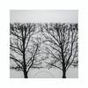 Arpège (hélène chantemerle) Tags: jardinsurbains paysage ville roue arbres urban garden landscape wheel trees black white