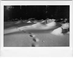 Trailside (Robert Drozda) Tags: fairbanks alaska wintertrail sledroad chenahotspringswintertrail snow bottomland borealforest fujiinstaxwidemonochrome instantfilm dogmushing tracks drozda