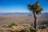 _DSC7142 (andrewlorenzlong) Tags: joshua tree national park joshuatree joshuatreepark joshuatreenationalpark california desert ryan mountain