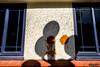 Splat (smellerbee) Tags: napier town shadow wall window nz new zealand splat orange