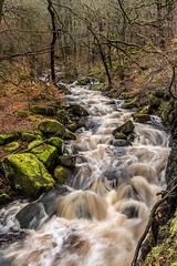 2018-04-03 PG-1390184.jpg (Hands in Focus) Tags: woodland derbyshire moss lumixfz1000 peakdistrict water padleygorge burbagebrook