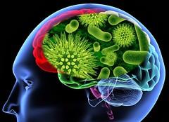 """Vírus """"amigo"""" pode ajudar no desenvolvimento cerebral (raisdata) Tags: bigdata desenvolvimentocerebral rais raisdata retrovírus retrovírusendógeno saudável saúde vidasaudável vírus vírusamigo"""