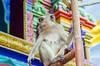 Long-tailed macaque at Batu Caves Kuala Lumpur (stefanamsterdam) Tags: longtailed macaque monkey java kuala lumpur batu cave