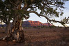 Flinders Ranges South Australia (Jacqui Barker Photography) Tags: australia australianoutback australianlandscape southaustralia southaustraliaoutback flindersranges wilpenapound rawnsleyparkstation gumtree
