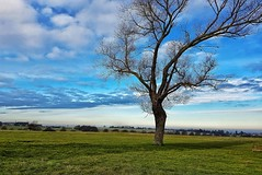 A lonely lovely tree!😊 (LeanneHall3 :-)) Tags: beverleywestwood field tree treetrunk branches green grass countryside blue sky skyscape landscape samsung