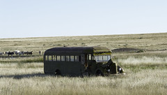 Bus. Stop. (unknown quantity) Tags: horizon shadows cattle pasture rust fadedpaint abandonedvehicle fence sky weathered oxidation neglect exposedmetal junk
