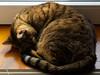 A sleeping Bubu (Raoul Pop) Tags: office home doorway sunlight sleeping bubu animal