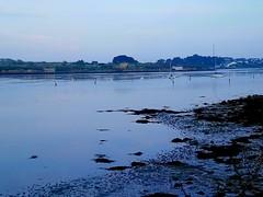 La rivière d'Etel, entre le Vieux-Passage et le Magouër (Bretagne, Morbihan, France) (bobroy20) Tags: plouhinec riadetel levieuxpassage morbihan etel brittany france tourisme bretagne eau varredetel auray lorient