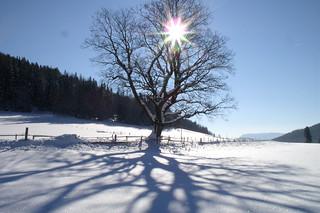Wintersonne im Naturpark Almenland