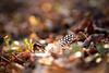 La piuma (Raffaella T.) Tags: feather nature wood grass light sun sunlight bokeh colors leaves sunset march winter