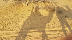 20180123_165148-01 (World Wild Tour - 500 days around the world) Tags: street art india andamane kerala auroville goa hampi wild free world tour chai palme mare spiaggia arambol delhi varanasi baba guru amazingindia monks monkey bundi rajasthan puri kolkata calcutta howra pushkar jaisalmer desert thar camel bus train munnar kodaikanal jaipur autostop