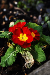 DSC_8935 (PeaTJay) Tags: nikon england uk gb royalberkshire reading winnersh flowers plants