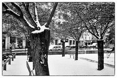Under Snow (Lyon,2018) (yoannpupat) Tags: snow trees grainy grain argentique film 35mm analog lyon bw noiretblanc streetphotography streetphotobw