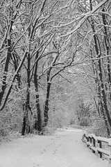 Promenade dans la neige ** (Titole) Tags: fence snow titole nicolefaton path tracks blackandwhite bw nb noiretblanc thechallengefactory