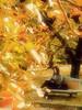 Autumn Scene Kyoto Botanical Garden (atria2718) Tags: japan nippon kyoto botanicalgarden autumn leaf fallen leaves bench women 日本 京都 植物園 秋 紅葉 葉 落ち葉 ベンチ 女性 book 本