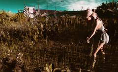 "Look#393 - ""Picking spring."" (A Lone) Tags: second life secondlife sl virtual dark light shadow art firestorm gimp photography windlight photo sim 3d female woman feminine girl human avatar people beauty model charm lovely attractive fashion lone blonde nature landscape scenery romance serene spring springtime flowers"