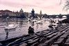 Karlův most (dgarcia_) Tags: karluv most charles bridge praha prague praga goose duck bird city river tower fly swan