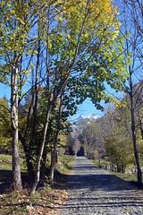 The road to the mountain (giorgiorodano46) Tags: ottobre2017 october 2017 valdimello road montagna mountain alpi alpes alps alpen lombardia strada giorgiorodano italy autunno autumn alberi trees montedisgrazia