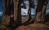 Back to the roots, SFO (reinaroundtheglobe) Tags: sanfrancisco bayarea california usa goldengatebridge trees framed sunshine landscape shadows nature traveldestination travelphotography touristdestination nopeople tranquility
