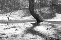 Snow Shadow (brucetopher) Tags: black white blackandwhite bw blackwhite monochrome mono snow spring winter snowfall storm snowing cold wet falling notwhatitseems shadow tree treemendous flakes cherry chokecherry choke street road garden